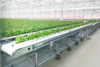 Picture for: Our growing systems