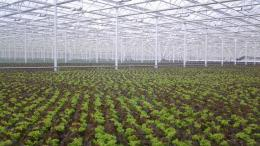 Green Automation, Living Lettuce reference, Poland, 2014