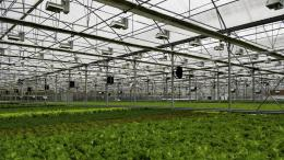 Green Automation, Living Lettuce reference, Russia, Asia, 2014