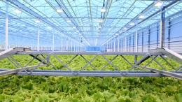 Green Automation, Living Lettuce reference, Russia, Europe 2015