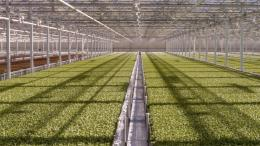 Green Automation Baby leaf lettuce interior MA