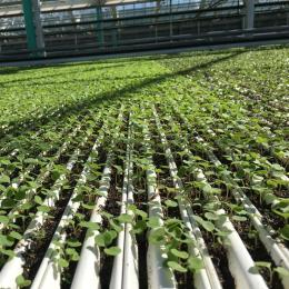 Green Automation - Fully Automatic System - Peat gutters