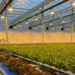 Green Automation - Fully automated system - Growing